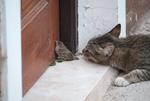cat and sparrow,