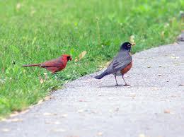 birds chasing.