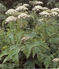 plants poisonous
