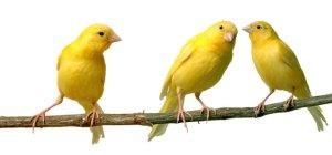birds-tweet
