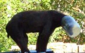 bear-jar_783772c