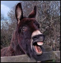 donkeys braying