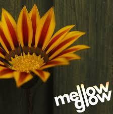 mellow glow