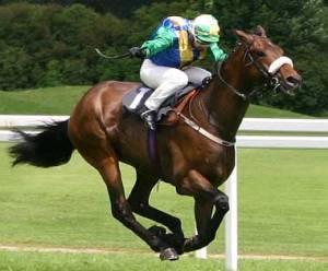 ThoroughbredHorse-racing