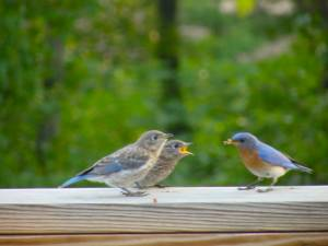 Backyard_birds_spring_and_summer_2006_134_800x600