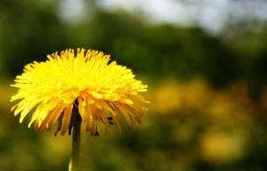04-08_yellow
