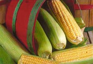 organic-food-corn-cob