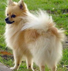 dog-tail-3rd-304x320