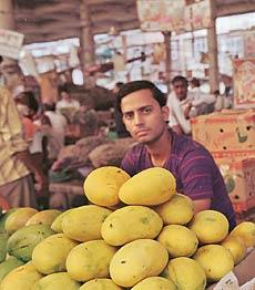 mangoes-3_230_050111023208