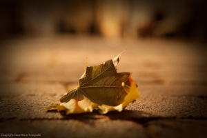 lonely_leaf_left_alone