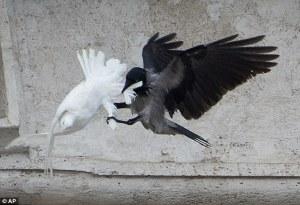 Peace flies
