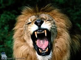 lion  ferocious