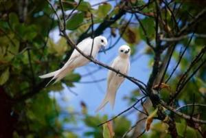 White birds in tree