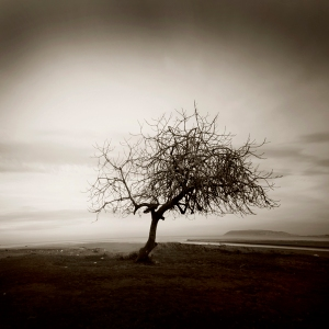 stand_still_by_queen_of_loneless