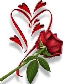 red_rose