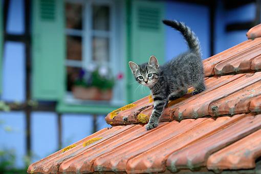 CAT-03-KH0058-01P