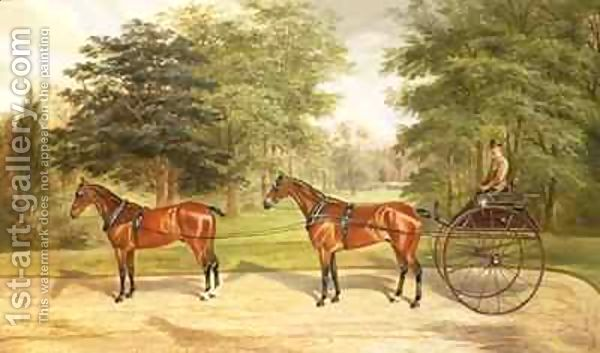 Two-Horses-Harnessed-In-Tandem-Pulling-A-Carriage-1883