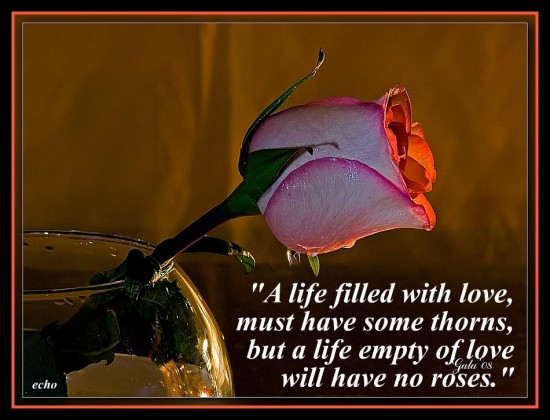 rose and life