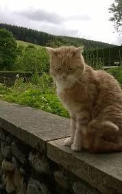 cat sits